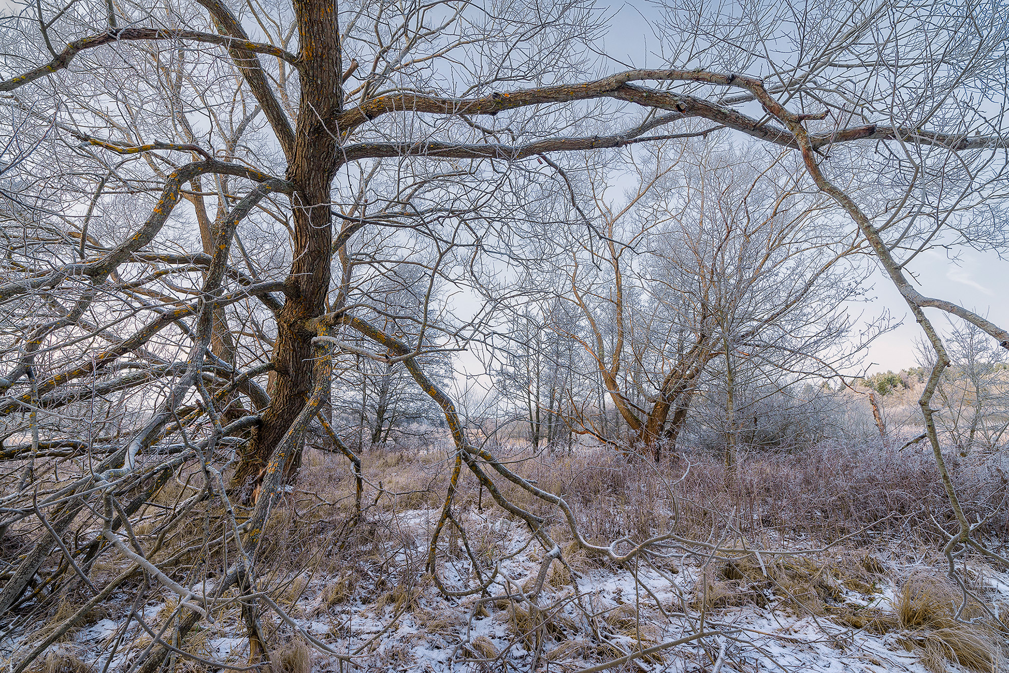 Zeiss Distagon 15 mm F2,8 test photo frosty trees by Hans Strand