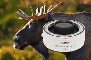 Test: Canon Extender EF 1,4x III