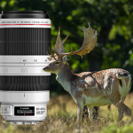 Test: Canon EF 100-400 mm f/4,5-5,6 L IS II USM + Extender 1,4x III
