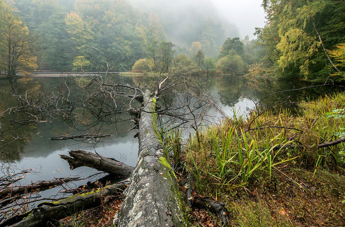 Claes Grundsten dammen Skäralid höst dimma naturfotografering