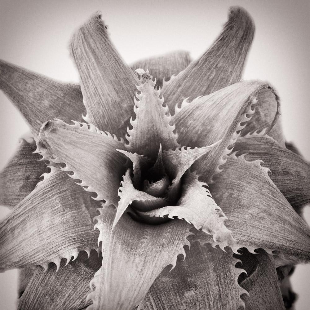 Bildbehandling med Nik Silver Efex Pro 2 program för svartvita bilder