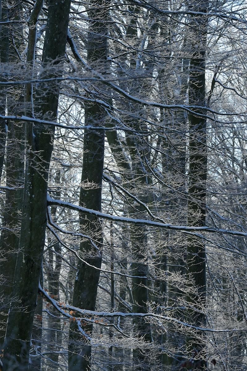 Vinter Skäralid Christian Nilsson naturfotoblogg Objektivtest.se