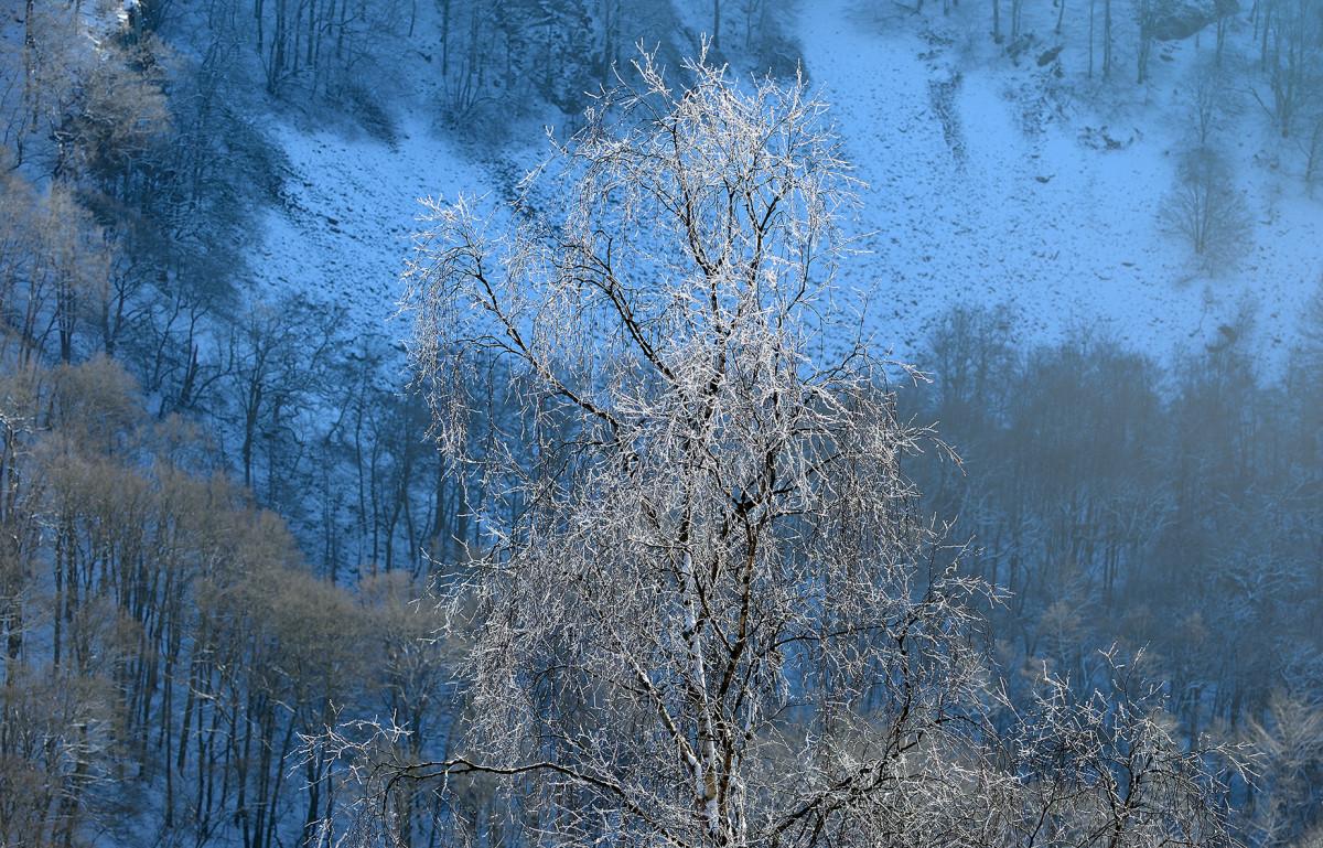 Naturfotografering vinter vid Skäralid björk med rimfrost foto Christian Nilsson Objektivtest.se