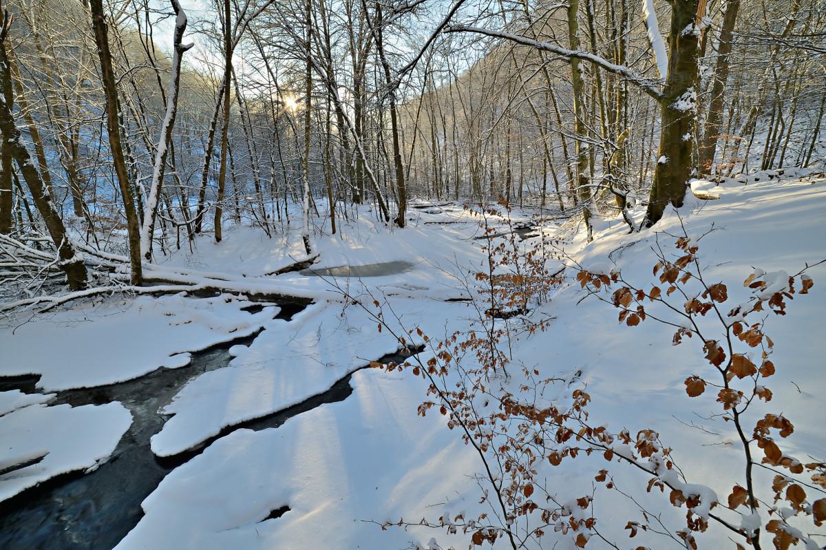 Samyang 14mm f/2.8 ED UMC ultravidvinkel test vinter i Skäralid Söderåsens nationalpark foto Christian Nilsson Objektivtest.se