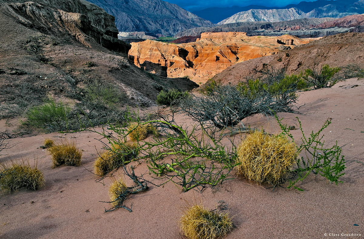 Mellan klipporna i Quebrada de las Conchas finns mycket sand där kämpande vegetation slagit rot. Foto Claes Grundsten naturfotograf