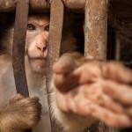 Tom Svensson – brinner för hotade djur