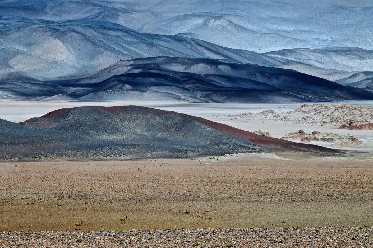 Två vikunjor vid saltöknen Puna de Atacama som livstecken på planeten Mars