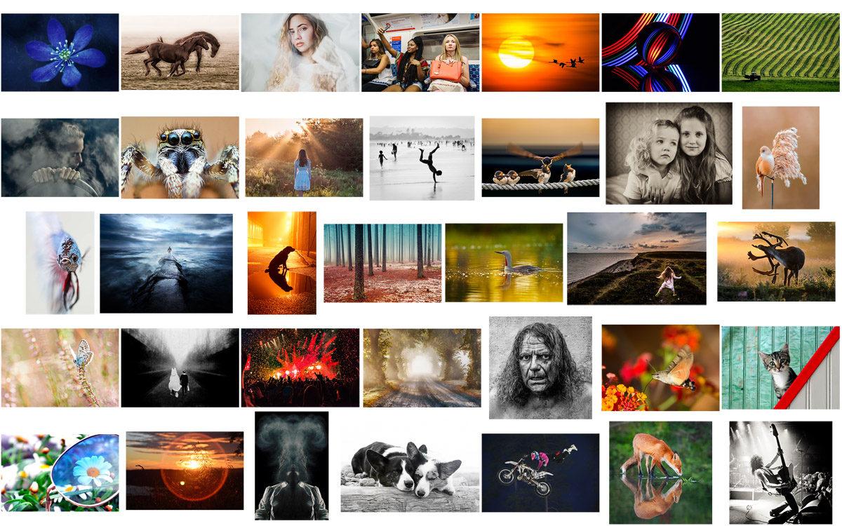 Objektivtest.se fototävling vinn ett Tamron makroobjektiv