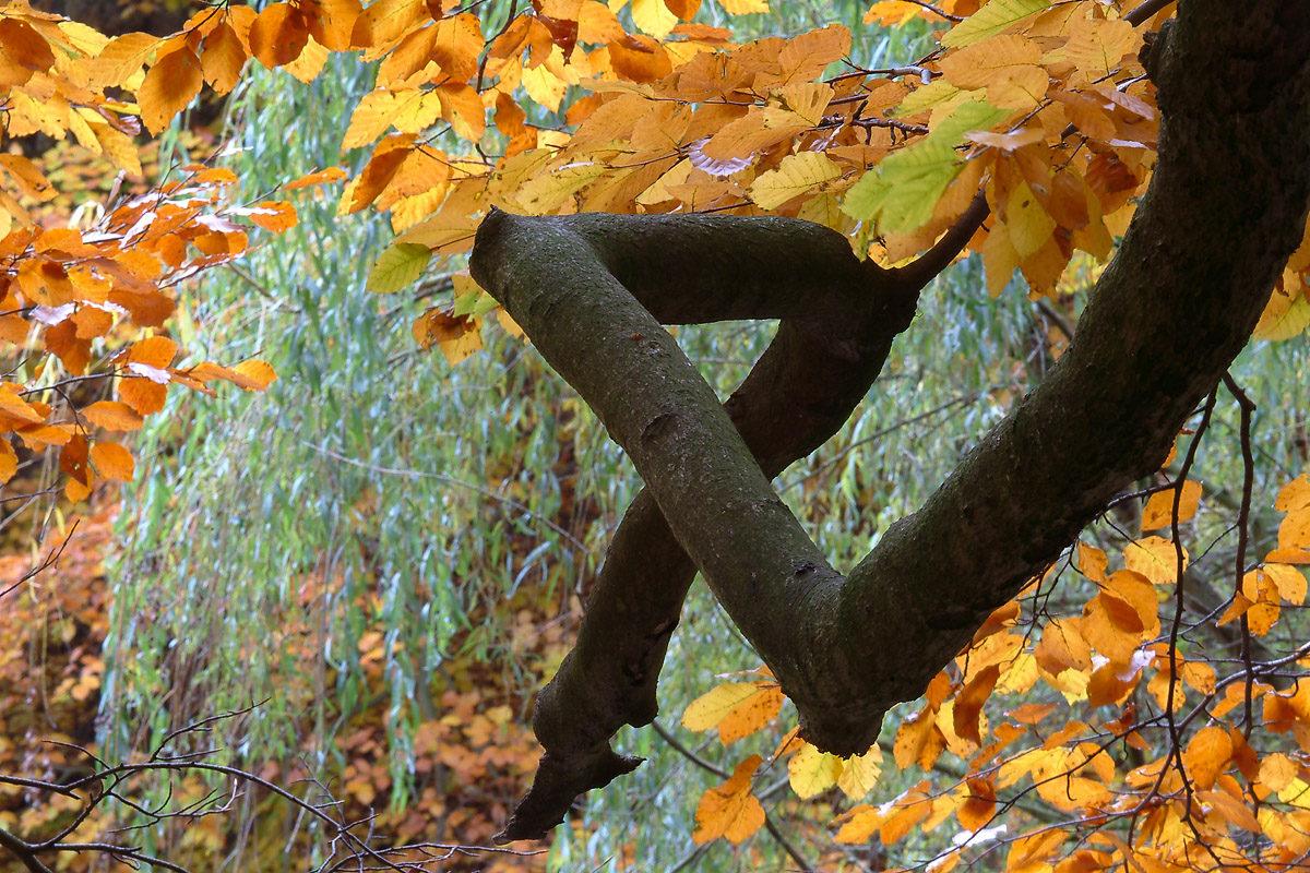 Krokig gren fototips foto Inge Johnsson