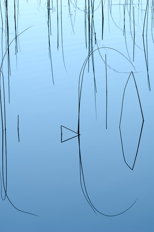 naturfotografi vass former i naturen foto Inge Johnsson