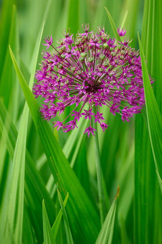 Blomma naturbild foto Inge Johnsson