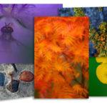 Fototips – fokusera på naturens färger