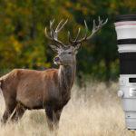 Canon EF 500 mm f/4 L IS II USM Test – mångsidigt supertele