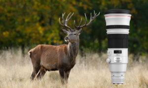 Canon EF 500 mm f/4 L IS II USM Test – mångsidigt supertele