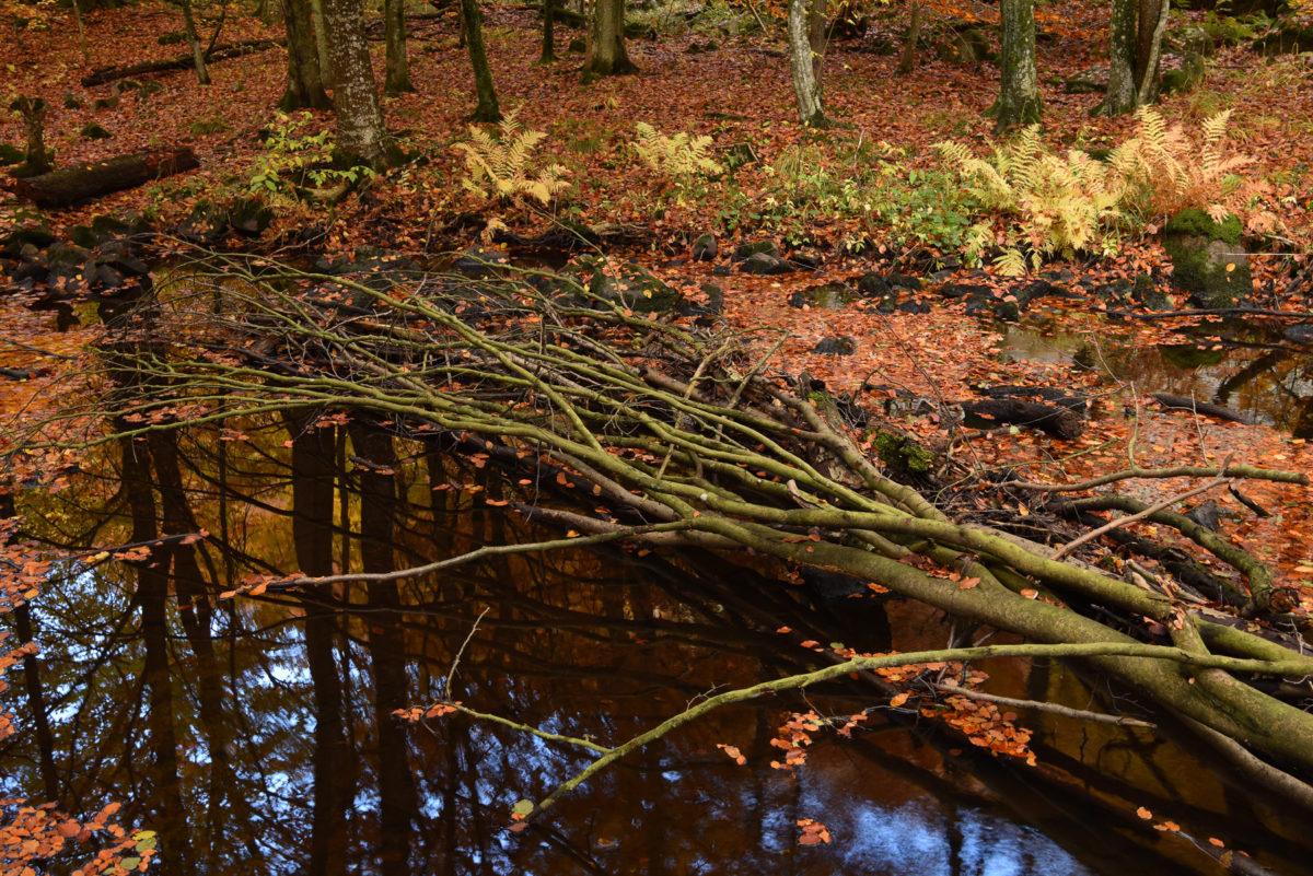 fallet-träd-skaralid-fotoutflykt-foto-christian-nilsson-objektivtest-se