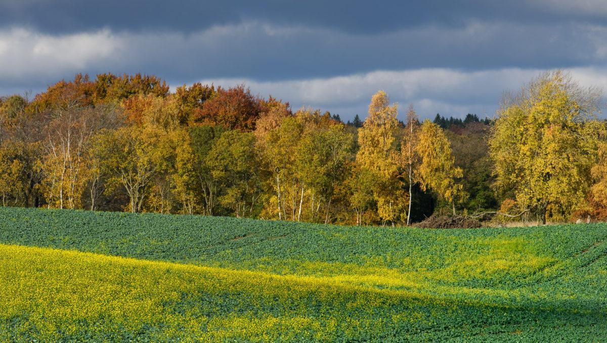 landskapsfotografering-oljerättika-höstfotografering-foto-christian-nilsson-objektivtest-se