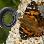 Test: Raynox DCR-150 försättslins för makrofotografering