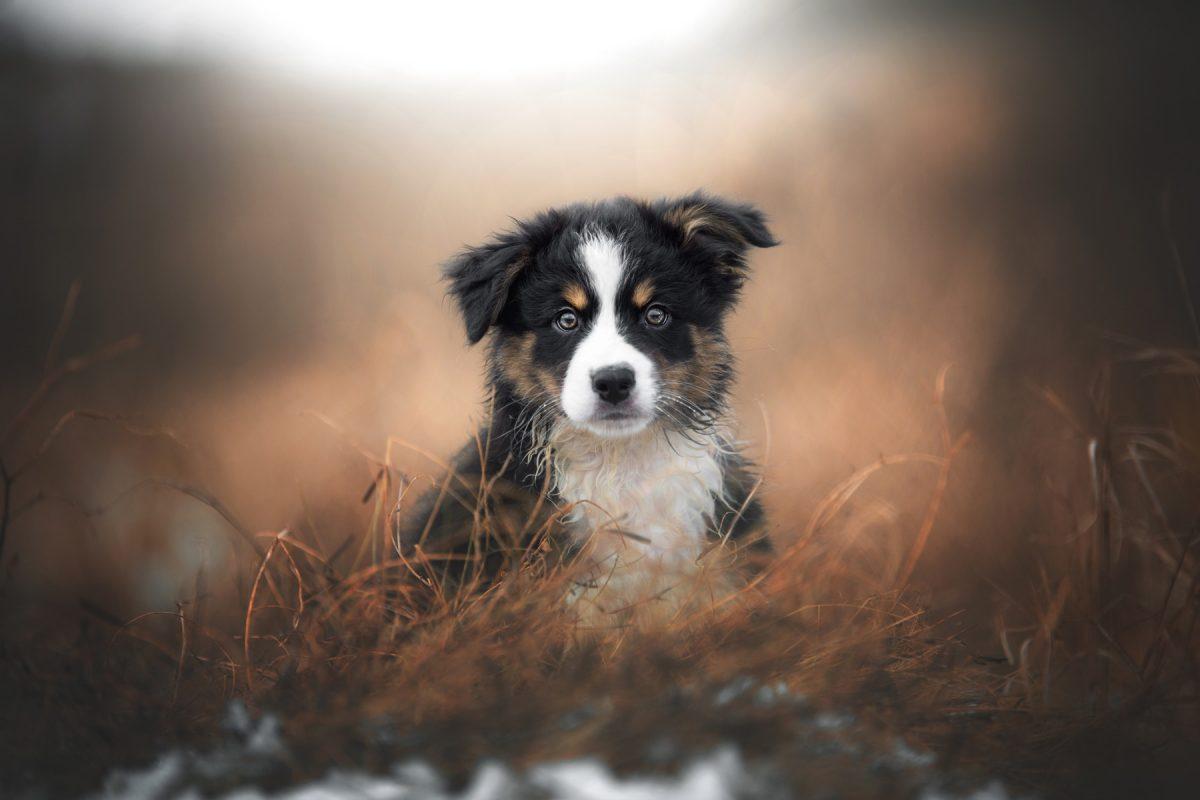Så fotograferar du hundar - fem tips av djurfotografen Jasmin Hummer