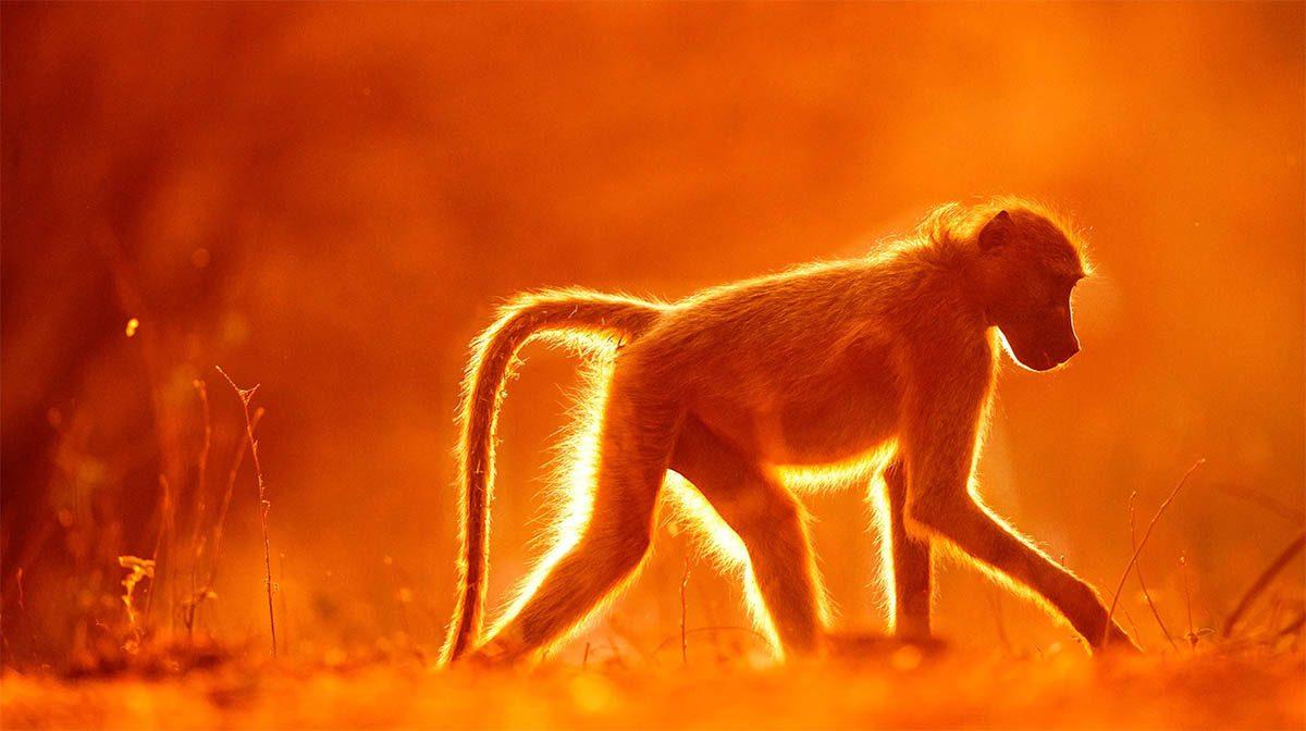 Under Afrikas himlar signerad fotobok av naturfotografen Brutus Östling